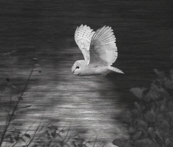 """Barney Owl! Art Print"