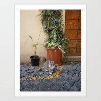 roman cat Art Print