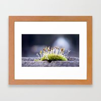 Maco Photography Moss Wa… Framed Art Print