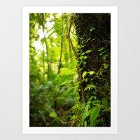 Trunk Of The Jungle Art Print