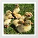 little goslings wildlife and ducklings in the meadow Art Print
