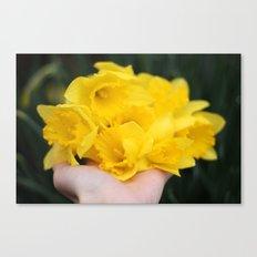 handful of daffodils Canvas Print