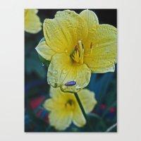 Dew Bug Canvas Print