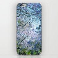 Jacaranda Canopy iPhone & iPod Skin