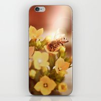 Honey Herder 2 iPhone & iPod Skin