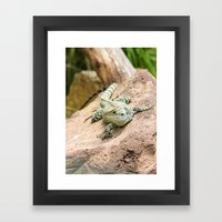 Lizard's Rest Framed Art Print