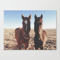 Horse Friends Canvas Print