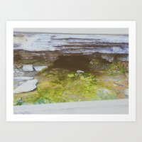 Nature's secret Art Print