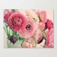 Ranunculus in Pink Canvas Print