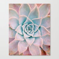 Pastel Succulent Canvas Print