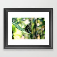 With a Broken Wing... Framed Art Print
