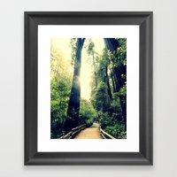 Muir Woods Path 2 Framed Art Print