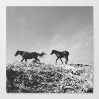 Pryor Mountain Wild Must… Canvas Print