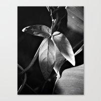 Canvas Print featuring Leaf by SmallIslandInTheSun