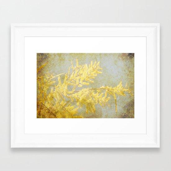 Golden Wattle Framed Art Print