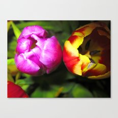 Pink and Red and Yellow Tulips Canvas Print