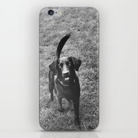 Dog 1 iPhone & iPod Skin