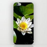 Pond Lilly iPhone & iPod Skin