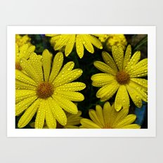 Yellow Flowers After the Misting Art Print