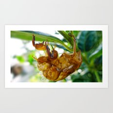 Cicada Shell Art Print
