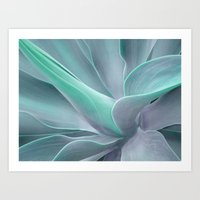 Blue Green Agave Attenuata Art Print