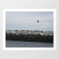 Cormorants In Provinceto… Art Print