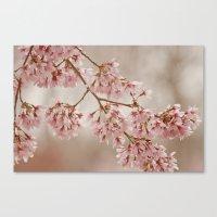Cherry Float Canvas Print