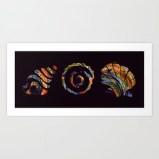 Deep Sea Shell Trio Art Print