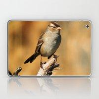 White-crowned Sparrow Laptop & iPad Skin