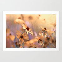 Suns star in the autumn garden Art Print