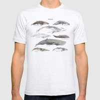 Whales Mens Fitted Tee Ash Grey SMALL