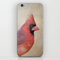 The Red Cardinal iPhone & iPod Skin