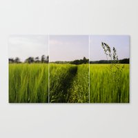 Corn 3 Canvas Print