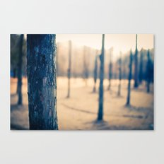 Nami Island Forest Canvas Print