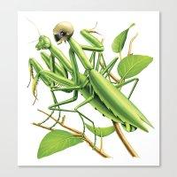 Safe sex for mantis Canvas Print