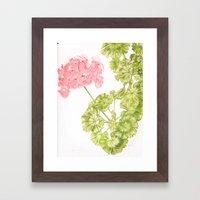 Pale Pink Geranium Framed Art Print