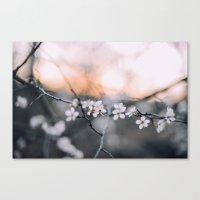 blooms . Canvas Print
