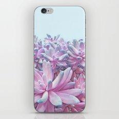 Sweet Succulents iPhone & iPod Skin