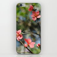 Spring Softness iPhone & iPod Skin