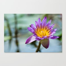 Blue Egyptian Water Lily 540 Canvas Print