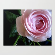 Stop to smell the roses Canvas Print