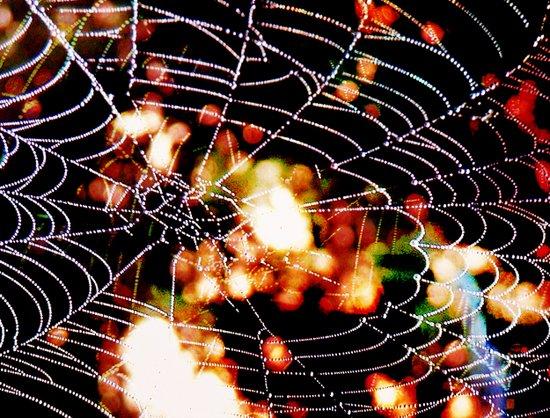 spider love Art Print