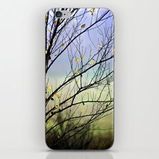 Riverbirch iPhone & iPod Skin