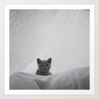 Kitten under the sheets Art Print