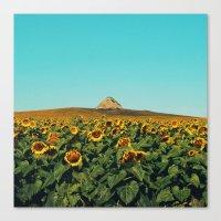 Sunflower Scene Canvas Print