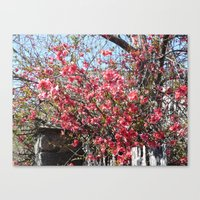 La Vie En Rose ! Canvas Print