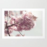 Spring's arrival: Cherry blossoms Art Print