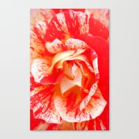 Two‑Color Rose Flower 3472 Canvas Print
