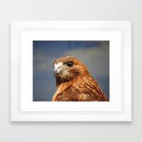 Red Tailed Hawk Framed Art Print