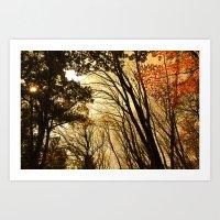 Autumn Boughs Art Print